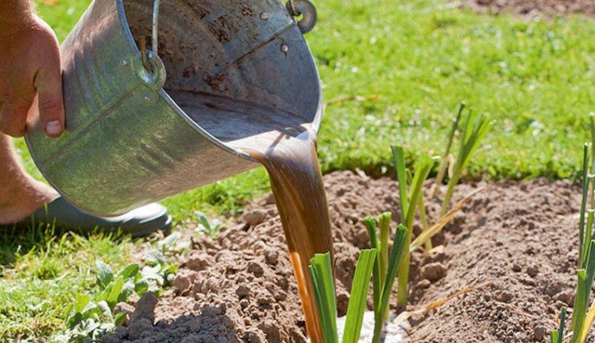 Удобрение лука-порея