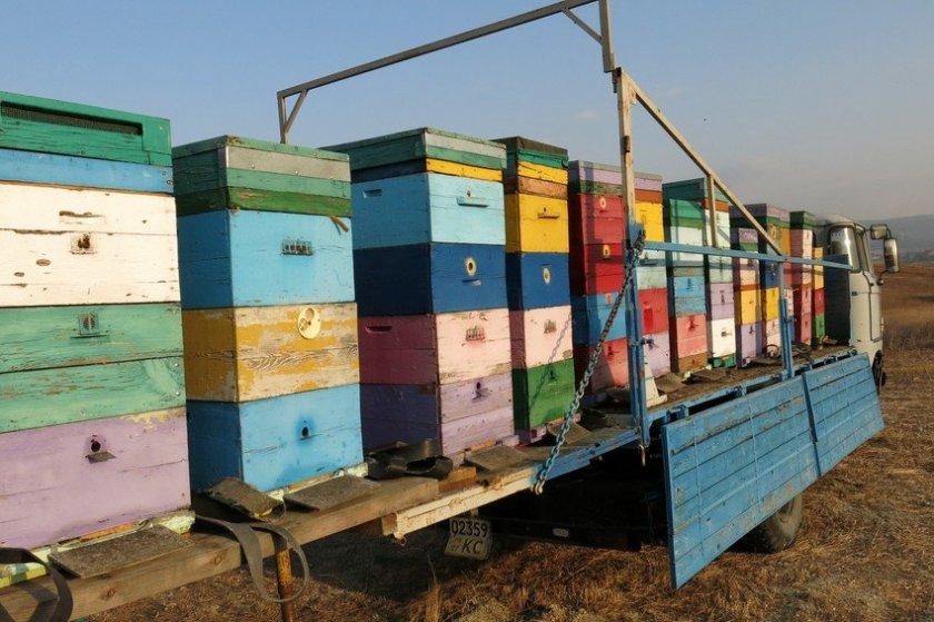 Перевозка пчелосемей