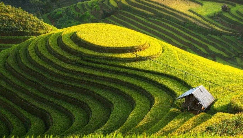 В Японии запускают пробную версию службы поддержки сельского хозяйства