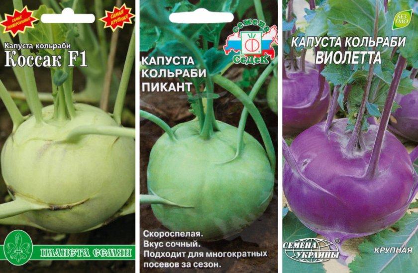 Сорта капусты Кольраби