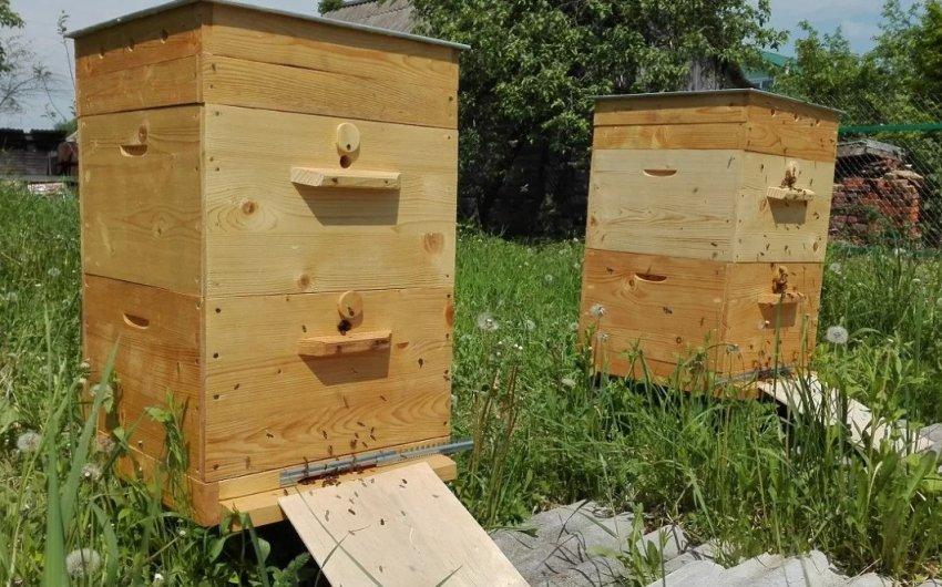 Двухкорпусный улей: пчеловождение, уход за пчёлами, технология содержания
