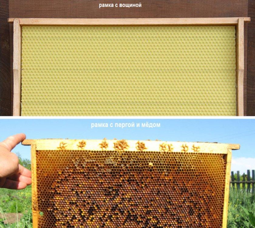 Рамка с вощиной и рамка с пергой и медом