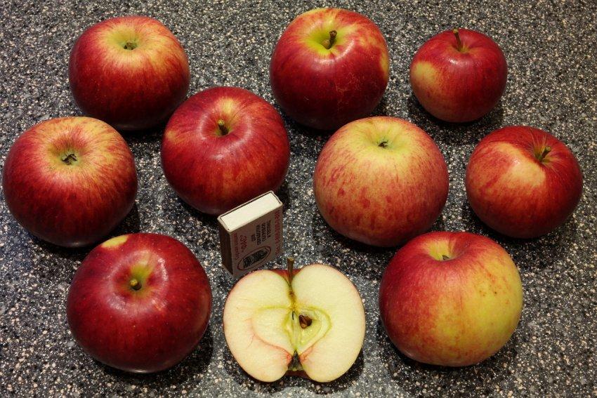 Яблоки сорта Юный натуралист