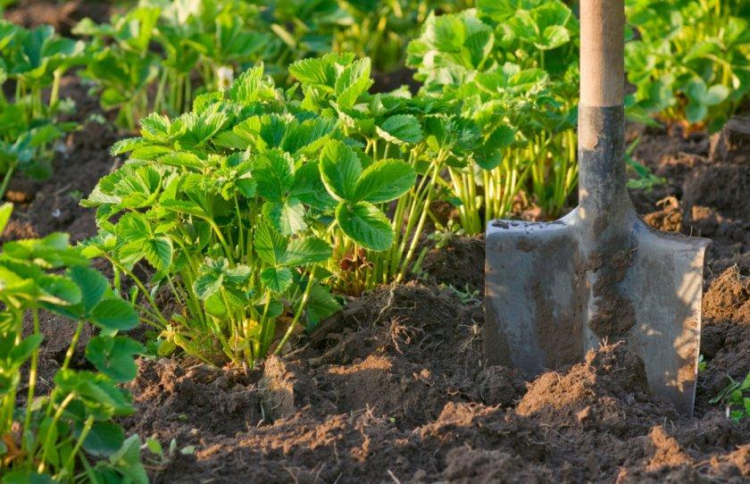 Место для выращивания клубники