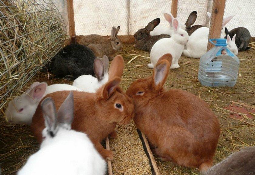 Питание кроликов в теплице