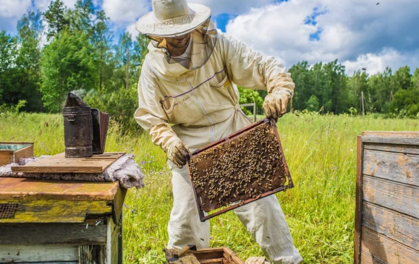 Пчеловод в костюме