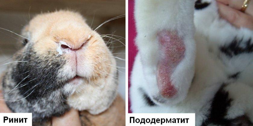 Заболевание в кроликов