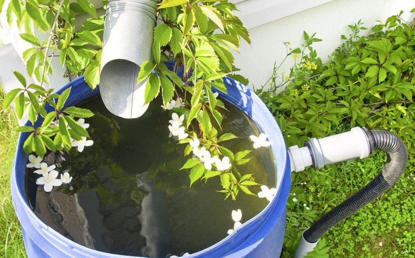 Вода для полива бахчевых