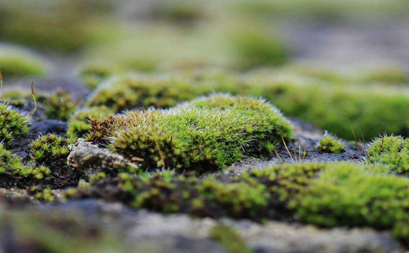 Почва покрыта мхом