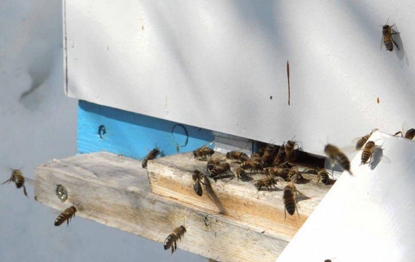 Облёт пчёл