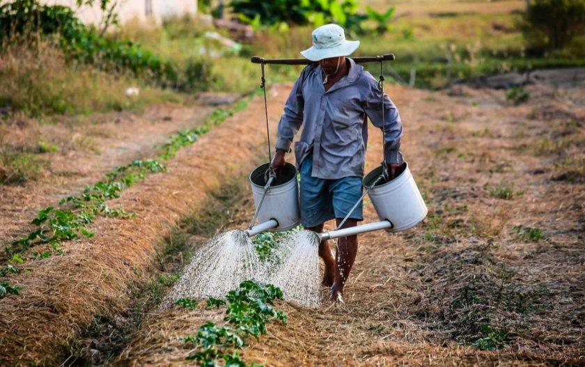 В Британии сельскохозяйственные лидеры обеспокоены сокращением трудовой миграции