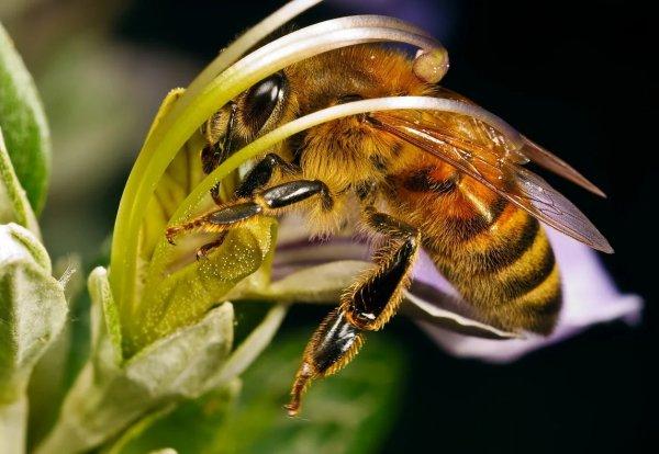 Количество пчел в улье