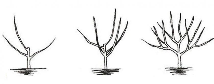 Чашеобразное формирование