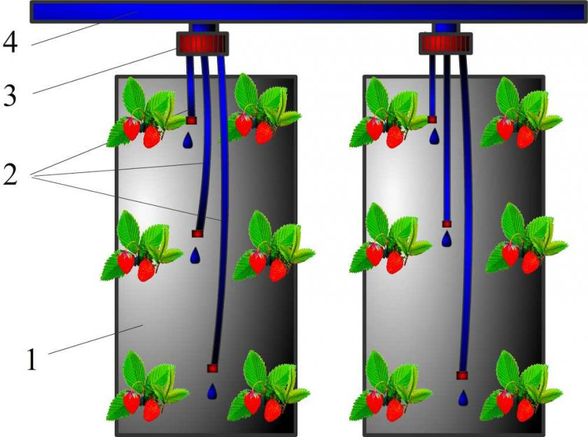 Как устроить полив клубники в мешках при вертикальном выращивании