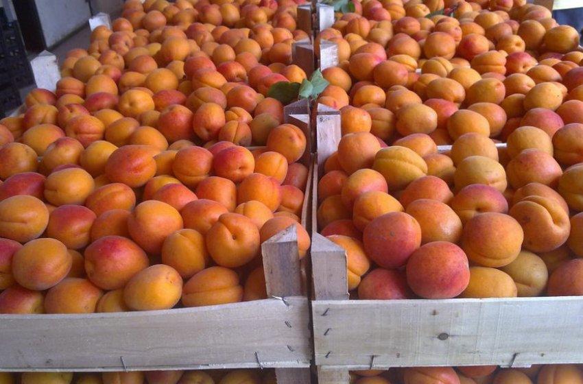 Хранение абрикоса Харгранд