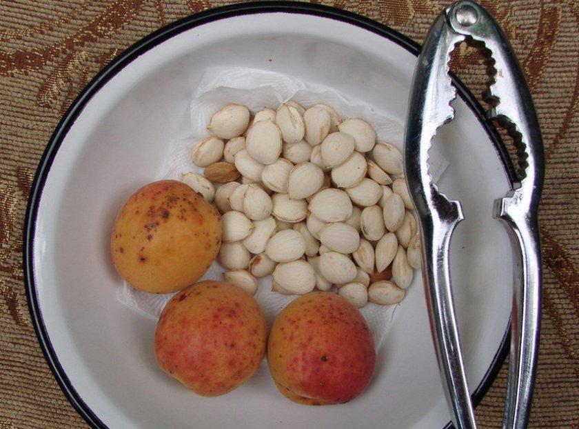 Извлеченные ядра абрикоса