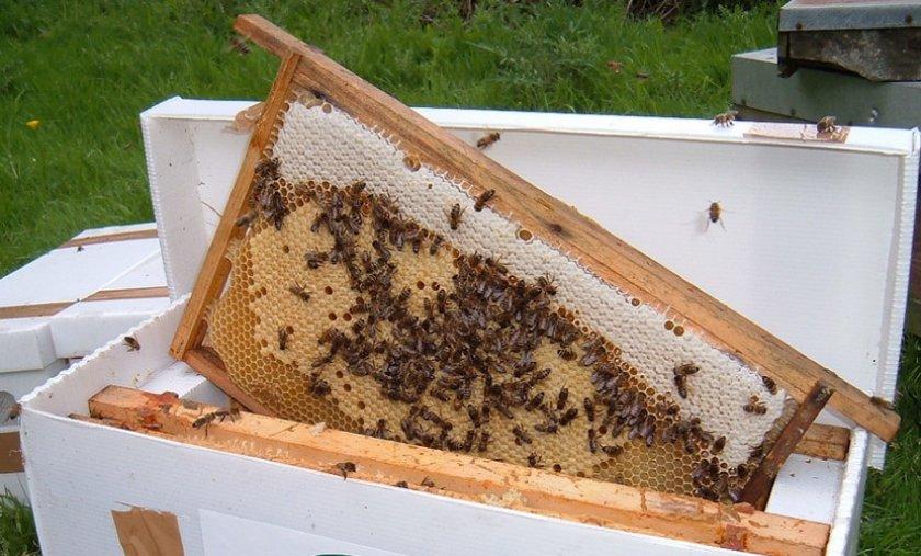 Пчелиные отводки
