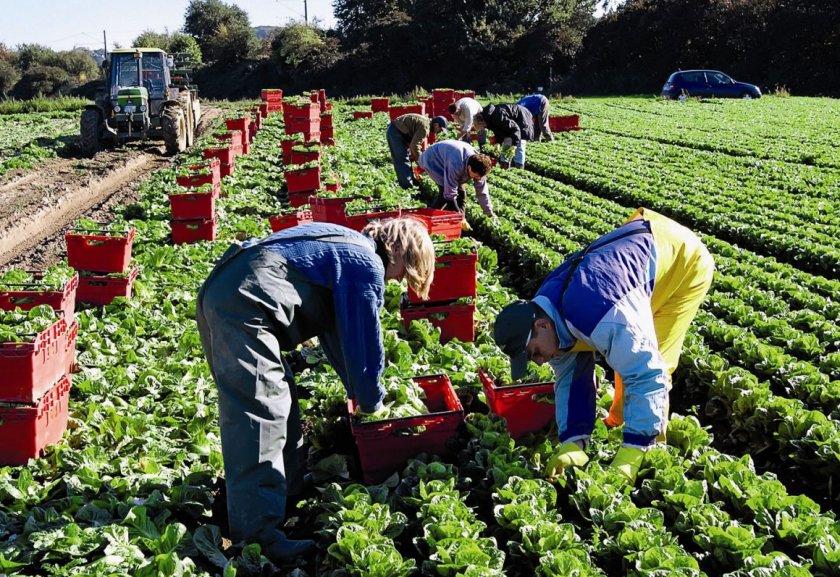 Британский депутат призывает расширить систему привлечения сезонных сельскохозяйственных рабочих