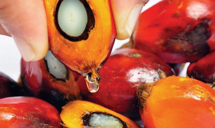 Китай увеличит импорт малазийского пальмового масла и инвестирует в завод по производству биотоплива