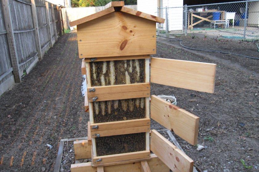 Пчёлы в улье Варрэ