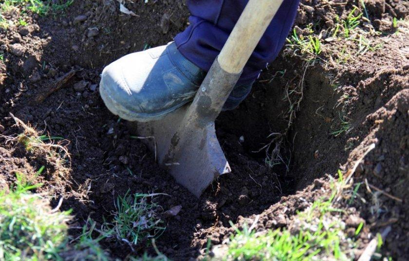 Подготовка ямы для саженца