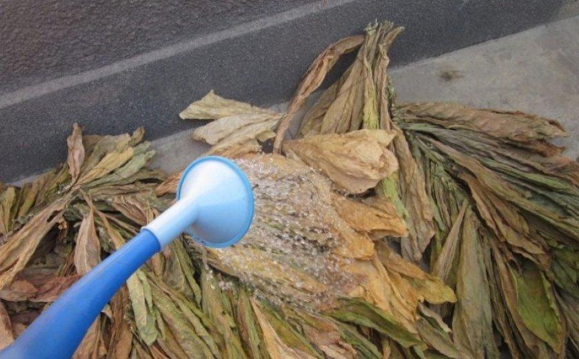 Подготовка табака к ферментации