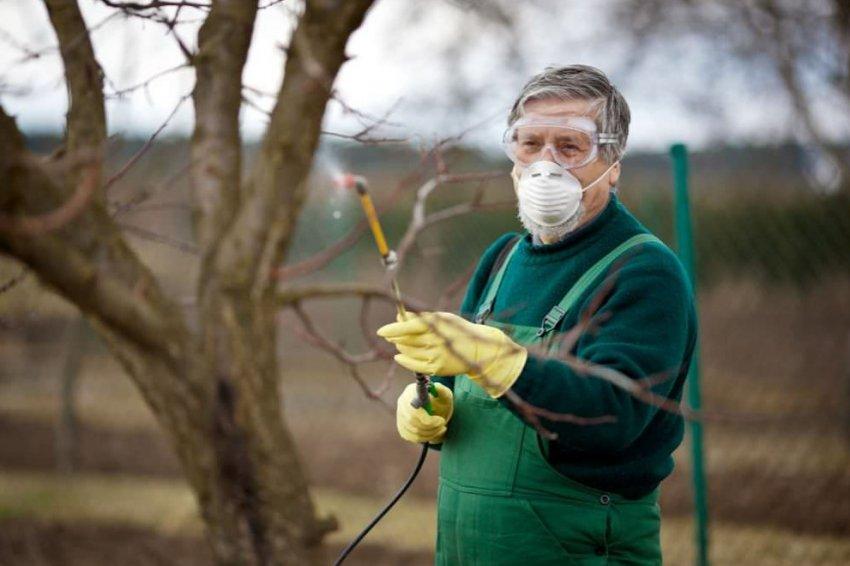 Опрыскивание абрикоса весной