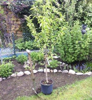 Где посадить персиковое дерево