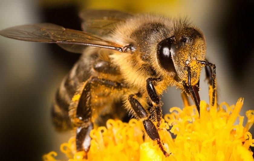 У пасечника из Николаевской области погибли почти все пчёлы