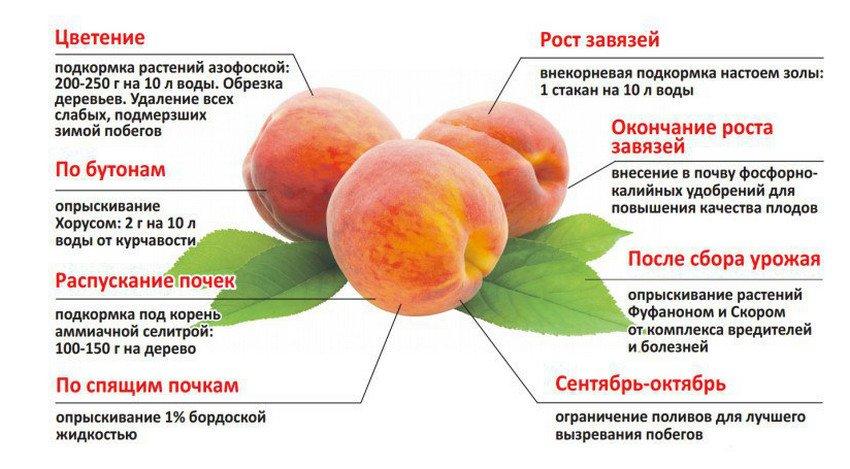 Подкормка персика на разных этапах