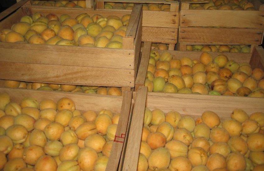 Хранение абрикоса