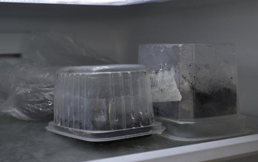 Персиковые косточки в холодильнике