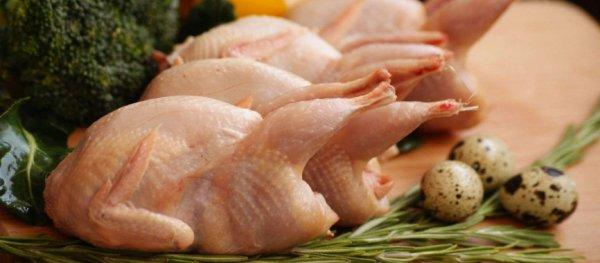Мясо перепелки: польза и вред. Как вкусно приготовить мясо перепелки?