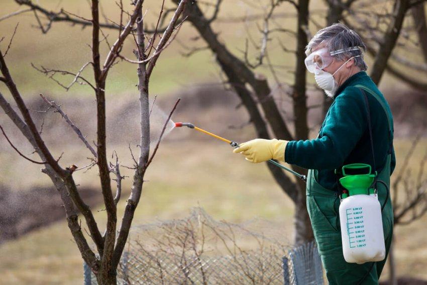 Опрыскивание персика осенью