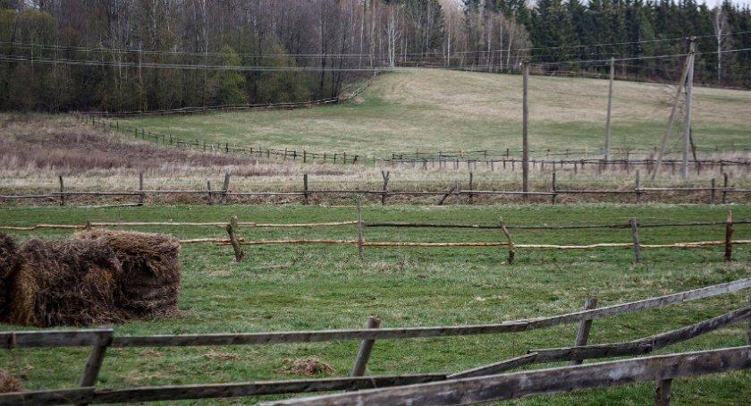 Место для конюшни