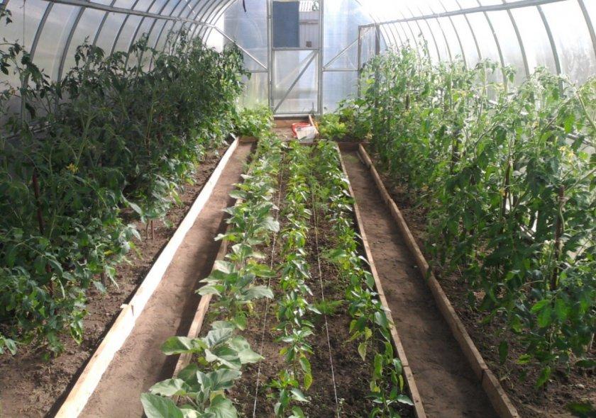 Выращивание культур в теплице