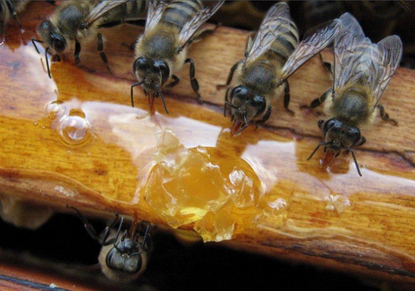 Кормление пчёл сирипом