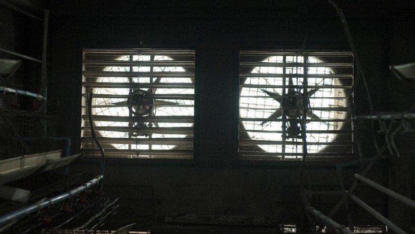 Вентиляция в курятнике