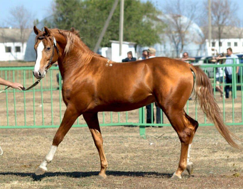 Лошадь для спорта