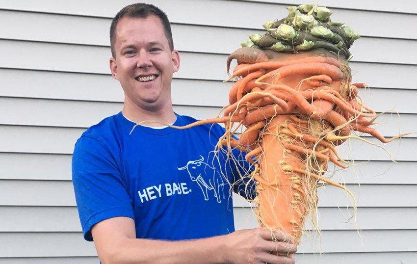 Самая большая морковь