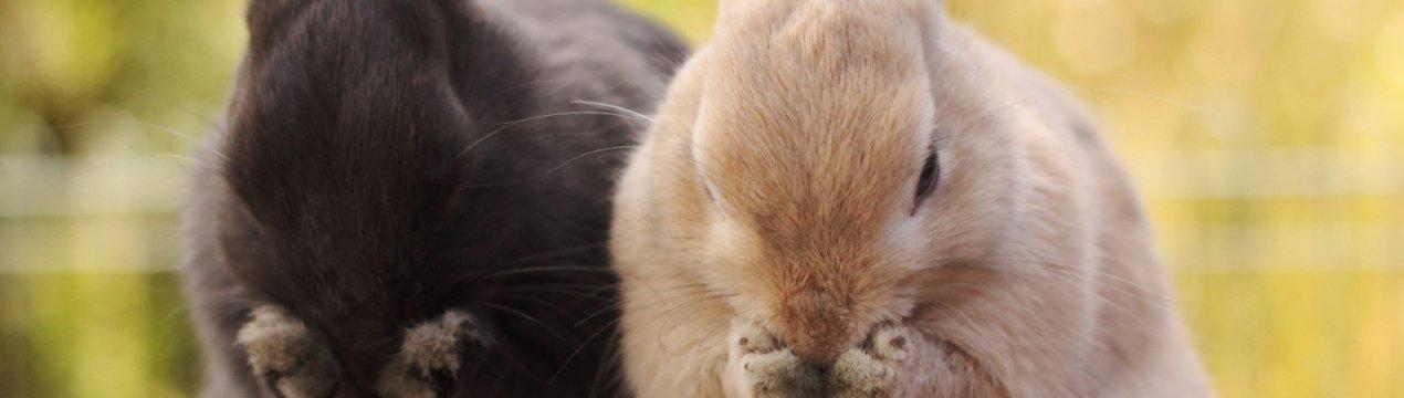 кролик чихает чем лечить