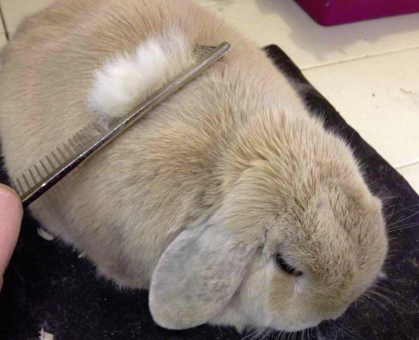 Правила ухода за кроликом
