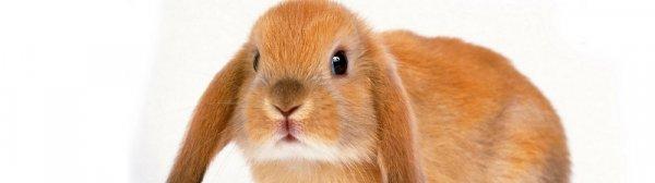 Кролик ест капусту