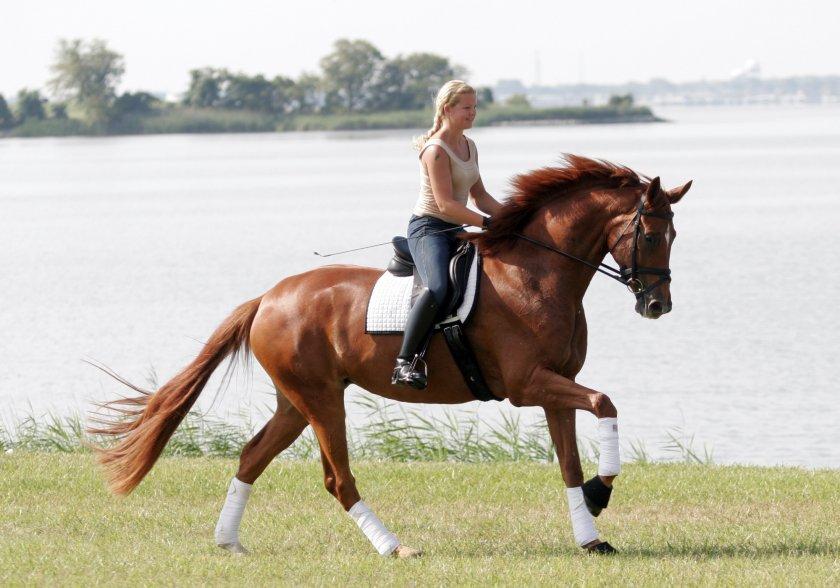 Будённовская порода лошади