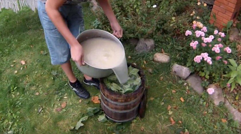 Моченые яблоки на зиму – 6 простых рецептов приготовления в домашних условиях