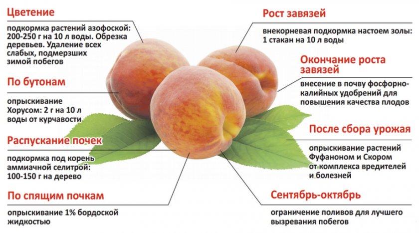 Правила подкормки персиков