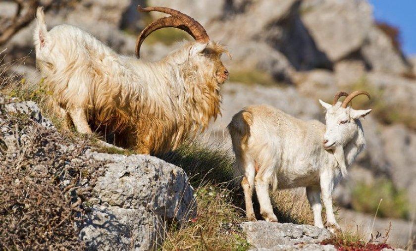 Периодичность и длительность охоты