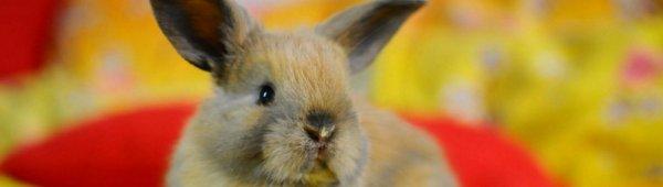 Аллергия на кролика симптомы и причины