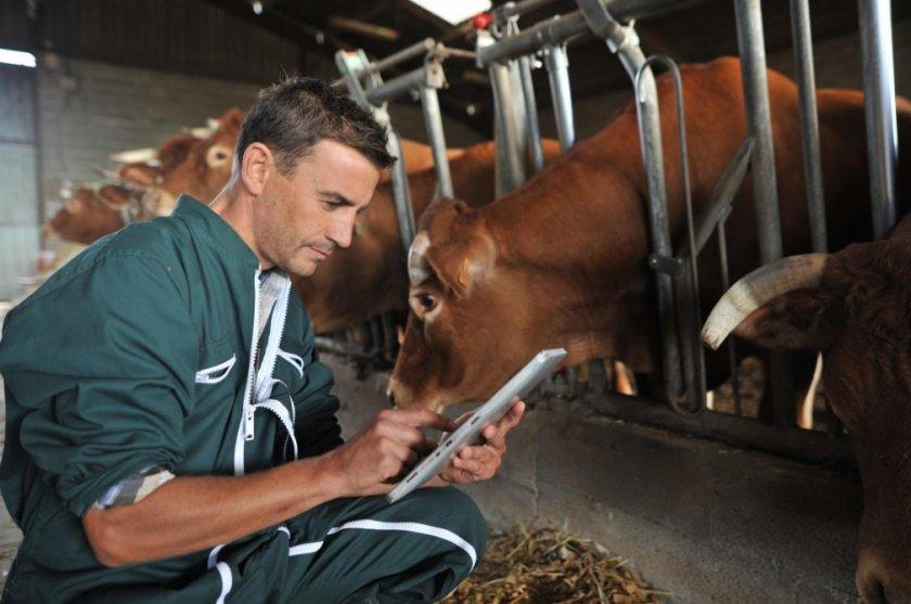 Какая должна быть температура у коровы agrovoz.su
