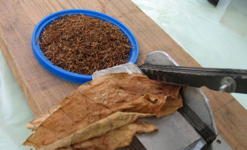 Лучшие сорта сигар: посадка и уход